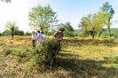 Akcija čišćenje Vrljike-17